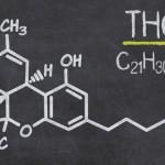 Une hormone naturelle pour limiter l'addiction au cannabis